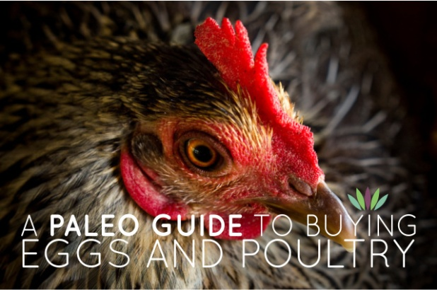 A-Paleo-Guide-to-Buying-Eggs-and-Poultry1