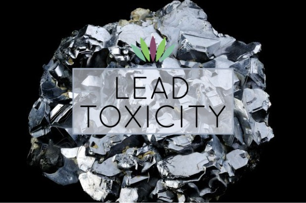 Lead-Toxicity