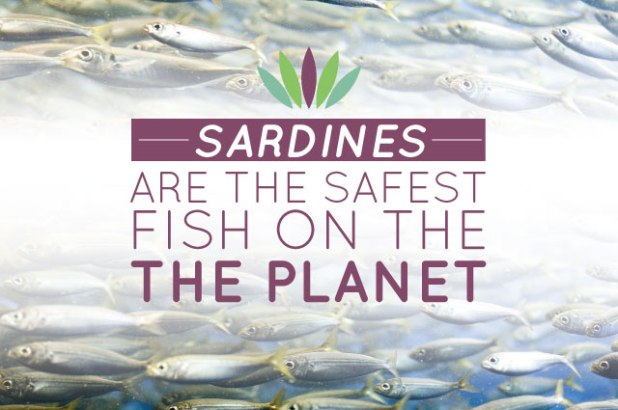 sardines_maingraphic