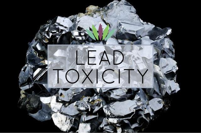 Lead-Toxicity