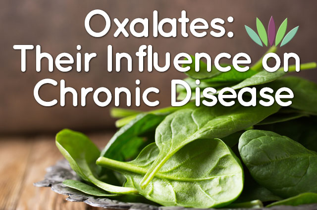 Oxalates-Their-Influence-on-Chronic-Disease-main-graphic